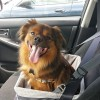 Consumers Desire More Pet-Friendly Features in Vehicles
