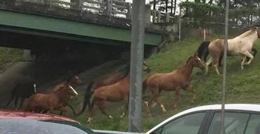 Horses on the Loose Halt Traffic on Atlanta-Area Highway