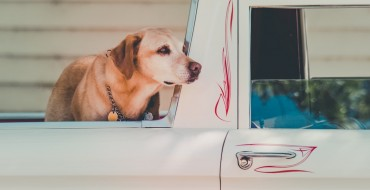 Is It Safe to Leave Your Dog in the Truck Bed? (Spoiler: Nope)