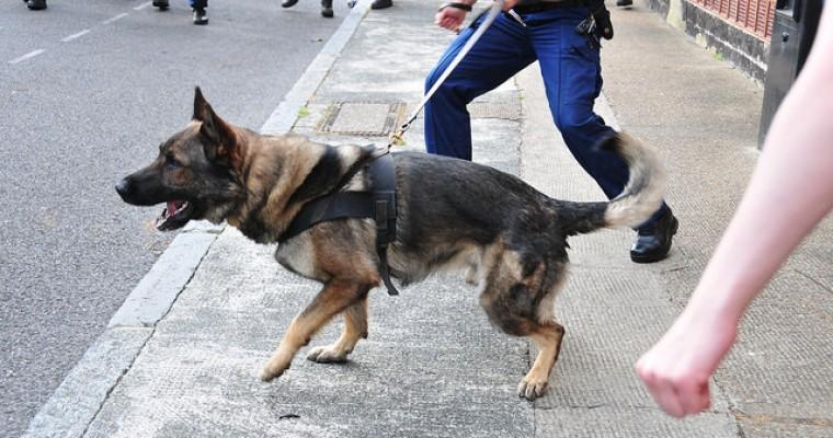 Canine against Crime: San Diego Police Dog Stops Crook