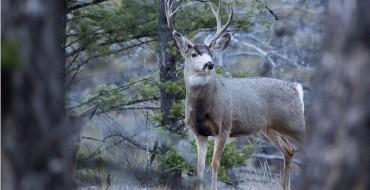 Buck Meets Buick in Wisconsin Deer Accident Before Midterm Elections