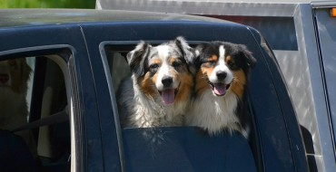 Understanding Car Safety Products for Pets