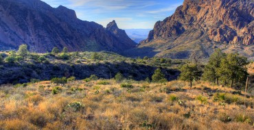 Road Trips for Nature Lovers: A Visitor's Guide to Big Bend National Park