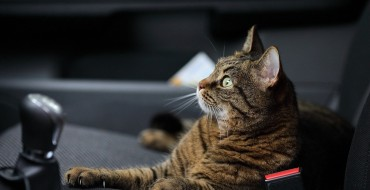 5 Tips to RV With Your Cat