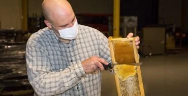 Ford World Headquarters' Bees Deliver Honey Harvest