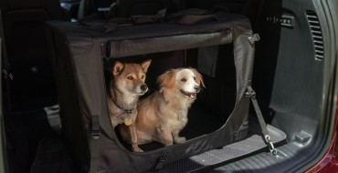 Jeep Wrangler and Chrysler Pacifica Are Best for Dog Lovers
