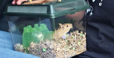 Tips for Transporting Your Hamster in the Car Without Traumatizing It