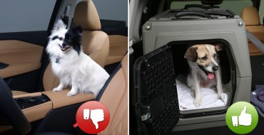 Nissan Offers Pet Safety Tips for Drivers