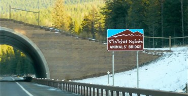 Everything You Need to Know About Animal Bridges