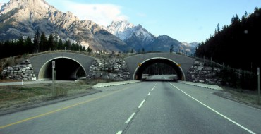 Wildlife Bridges in Utah and Beyond Keep Drivers and Animals Safer