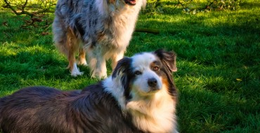 Best Dog Breeds for Active RVers