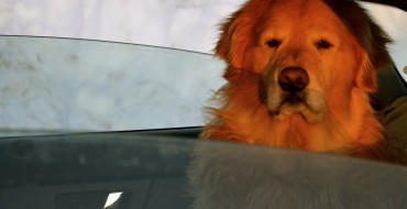 Extra Costs of Road Tripping With Your Dog