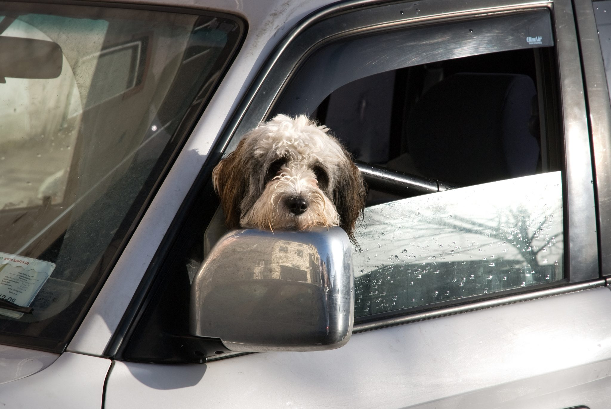 Boston Auto Show >> Dogs in Hot Cars - The News Wheel