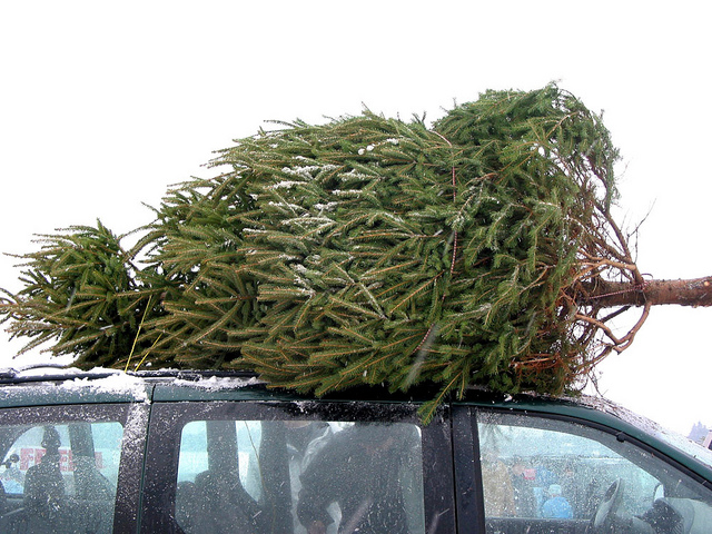 How to Transport Your Christmas Tree