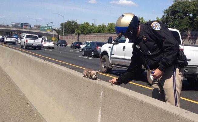 Contra Costa California Highway Patrol Rescues Chihuahua