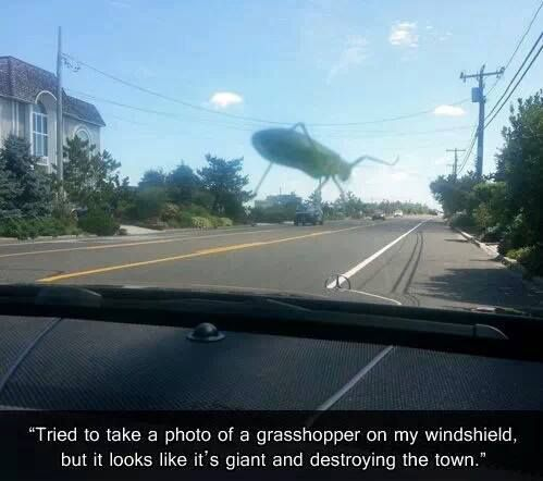 best car memes grasshopper