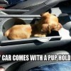 best car memes pup holder