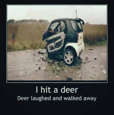 Best Car Memes smart car
