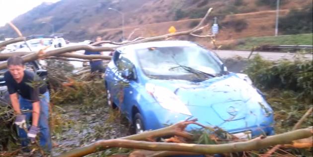 Tree Crushes LEAF