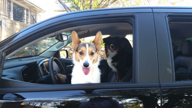 Two satisfied (and hairy) Chevy Colorado customers