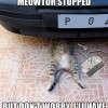 cats in car engines