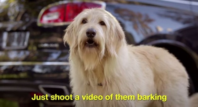 Just Shoot a Video of them Barking