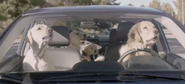 Who Are The Dogs In The Subaru Dog Commercials The News Wheel