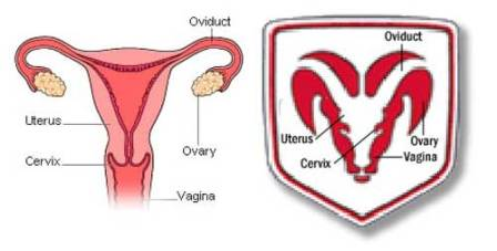 Dodge RAM logo head uterus vagina similarity