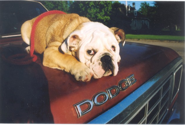 Pet Proof your car