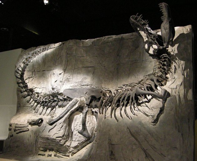 You'll have to settle for an ordinary T-rex skeleton instead Photo: Madeleine Holland