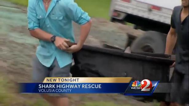 Shark dies in truck crash