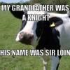 cow pun