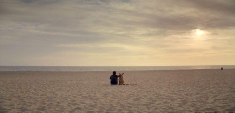 subaru impreza commercial - dog on beach - willie nelson