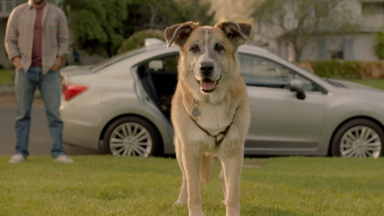 "The adorable dog from the Subaru Impreza ad, ""Dream Weekend"""