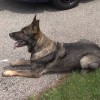 Ohio 'No K9 Left Behind' Program Aims to Keep Police Dogs Safe from Hot Cars