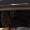 The Office - Goodbye, Toby - Raccoon
