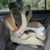 Gov. Christie signed the new car seat legislation into law all the way back in May.