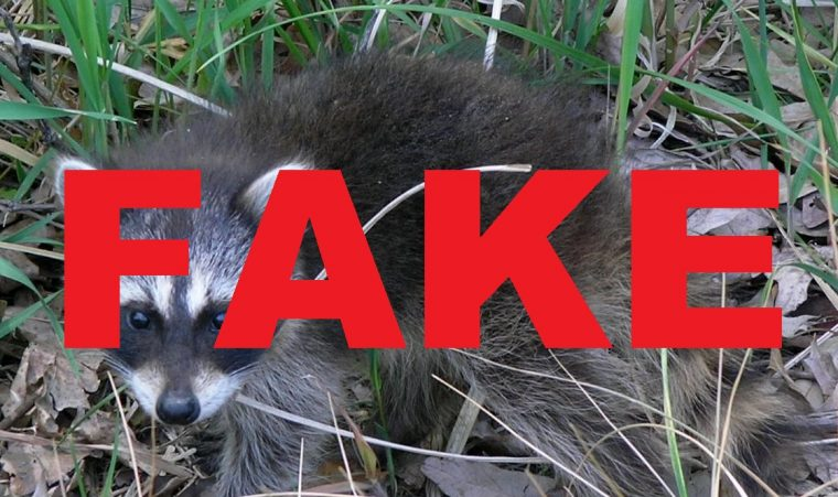 Fake Raccoon