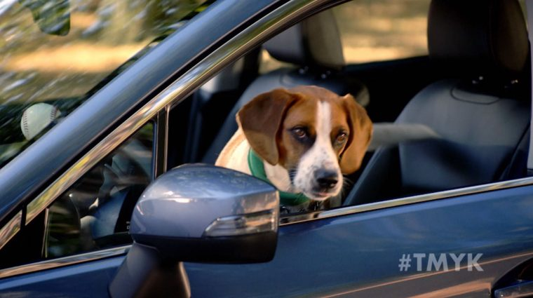 """Andy Cohen, his dog Wacha, and a Subaru star in the newest """"The More You Know"""" spot to promote pet adoption"""