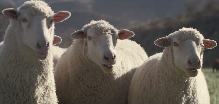 "2016 Honda Super Bowl commercial for 2017 Honda Ridgeline features sheep singing ""Somebody to Love"" by Queen"