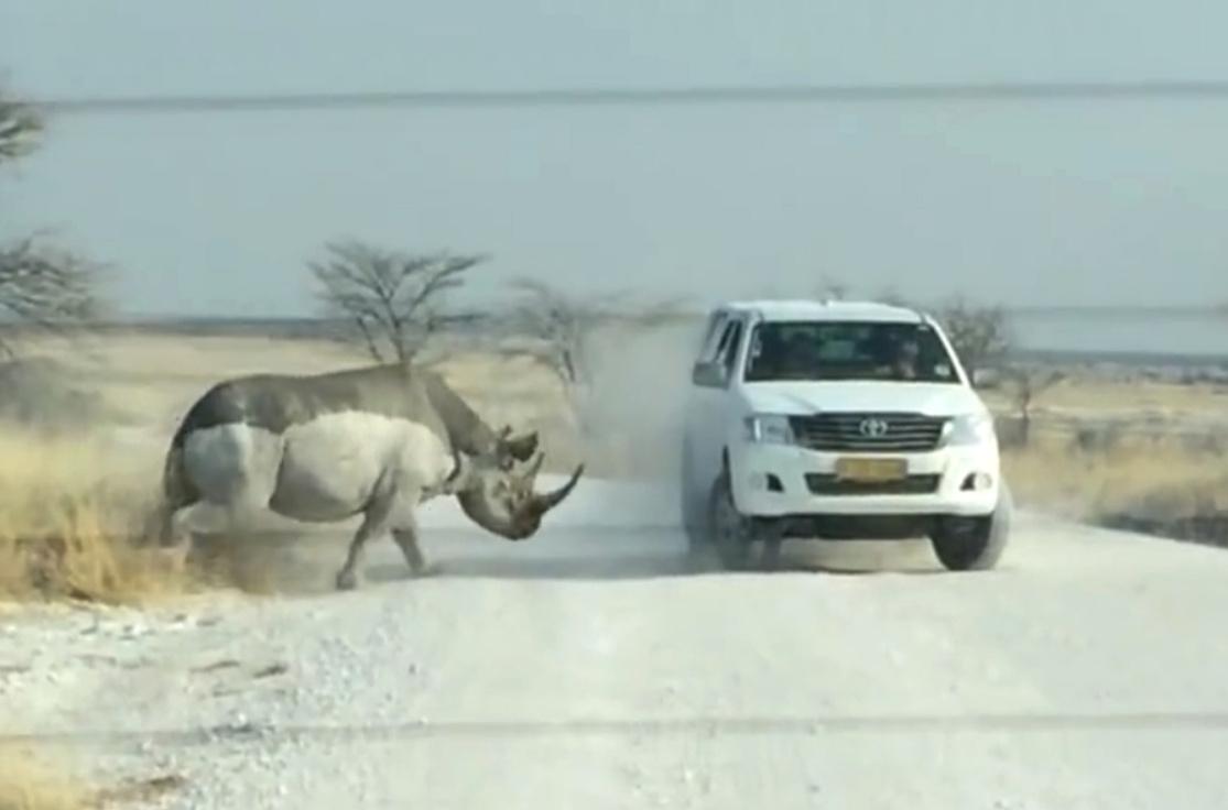 Angry Rhino Attacks Menacing Toyota SUV in Namibia - The ...