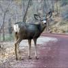 deer in roadway comprehensive car insurance