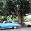 tree next to classic cars comprehensive insurance