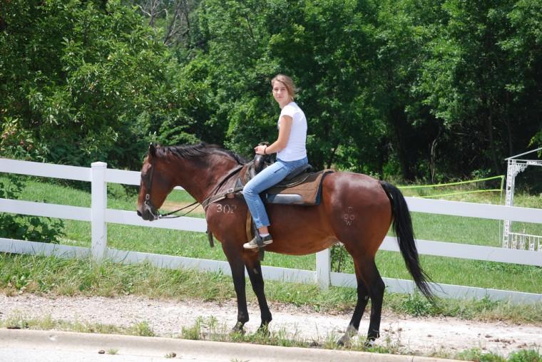 horse in road weird pennsylvania laws