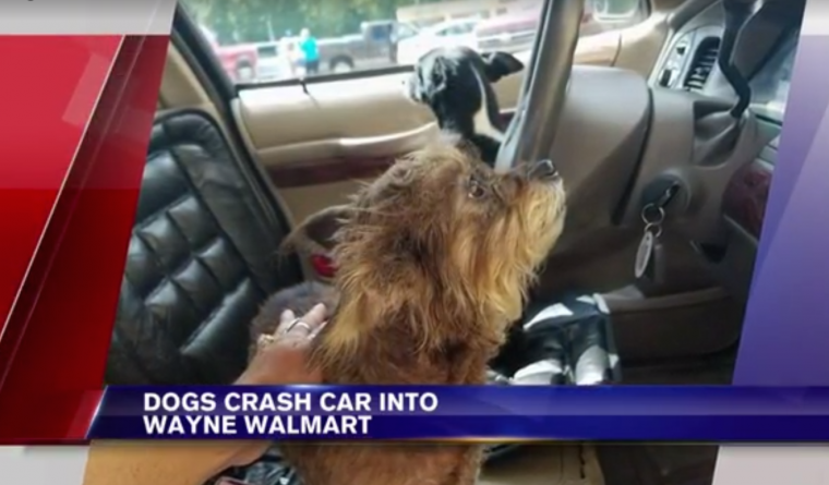 Dogs crash car into a West Virginia Walmart