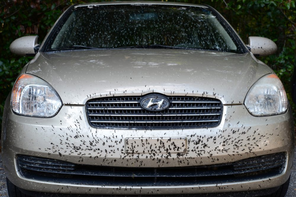 how to remove bugs on car bumper