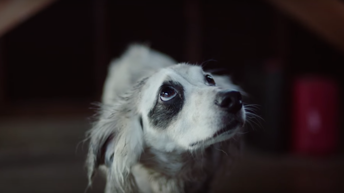 honda steals subaru u2019s shtick with emotional dog commercial