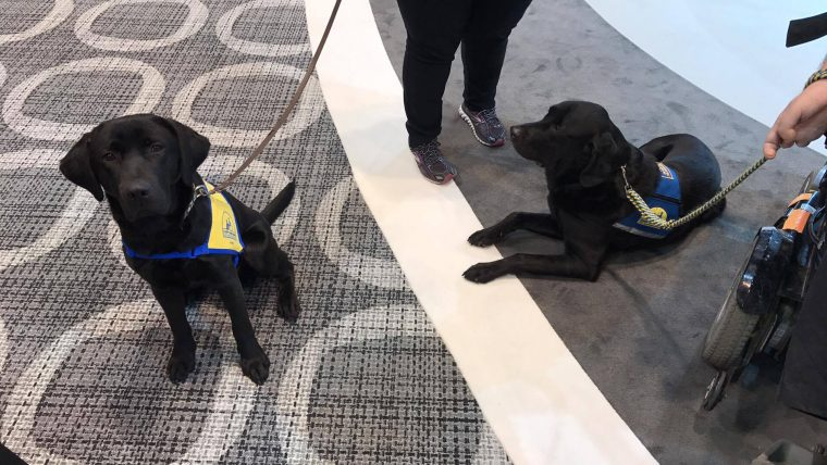 Four-legged representatives from Canine Companions