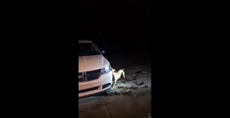 dog destroys bumper