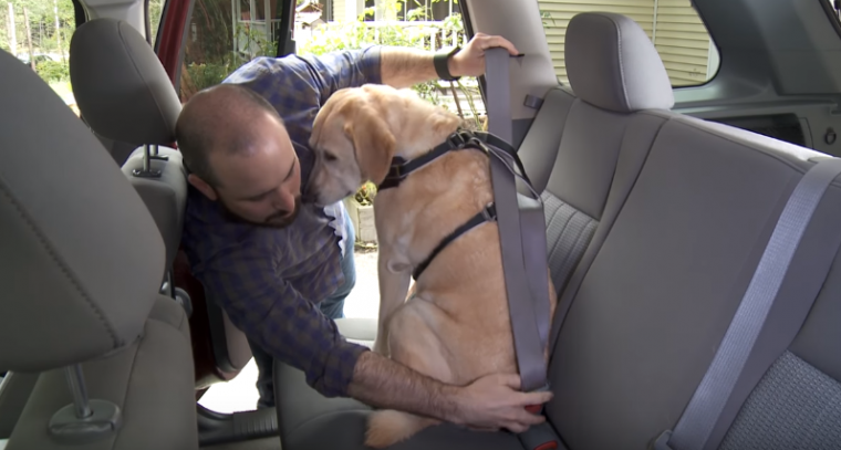 dog seatbelt dog harness